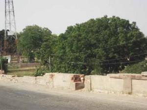 Kasba Cholapur Nadi web