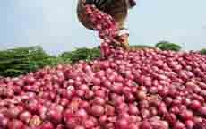 Onion-Produce