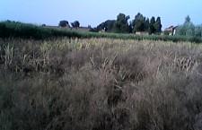 04-09-14 Kshetriya Faizabad - Fasal 2