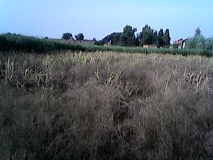 मुआवज़े के लिए टावर पर चढ़ा किसान