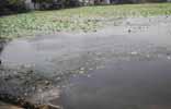 तालाब का गंदा पानी पियैं का मजबूर