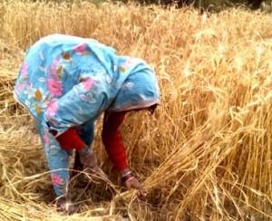 15-04-15 Kshetriya Banda - Farmer Pachchi 2 web
