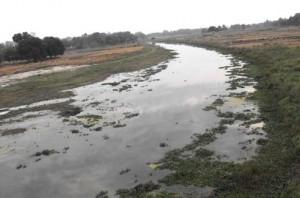 नदियों को प्रदूषित कर रही चीनी मिल