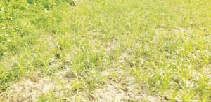 किसान अबै तक लगाये मुआवजा का आसरा