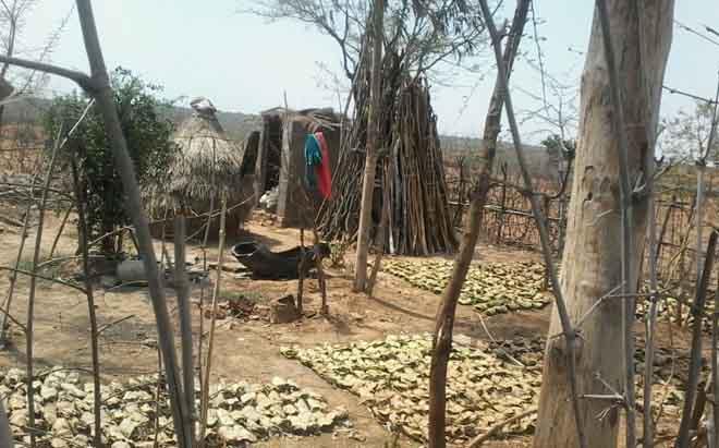 सरहट गांव में सूखते तेंदू पत्तें