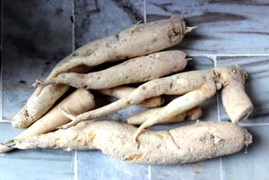 19-02-15 Mano - Food - Adiya web