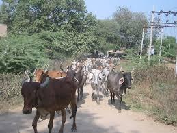 29-01-15 Desh Videsh - Rural Affairs - Maveshi