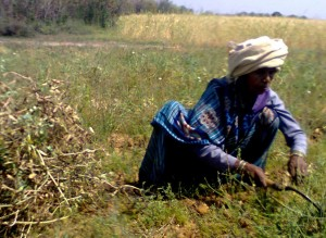 26-02-15 Mahoba - Mahila kisaan (old photo) for web
