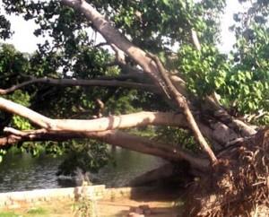 29-07-15 Faizabad Poora - Deforestation web