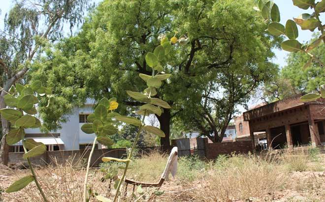 यह आँगन, उनकी कुर्सी और उनके किस्सों का जीता-जागता गवाह है यह नीम का पेड़। जिसे बड़े ही प्यार से केदारनाथ सींचा करते थे। इस पेड़ का जिक्र उन्होंने अपनी कविताओं में भी किया है