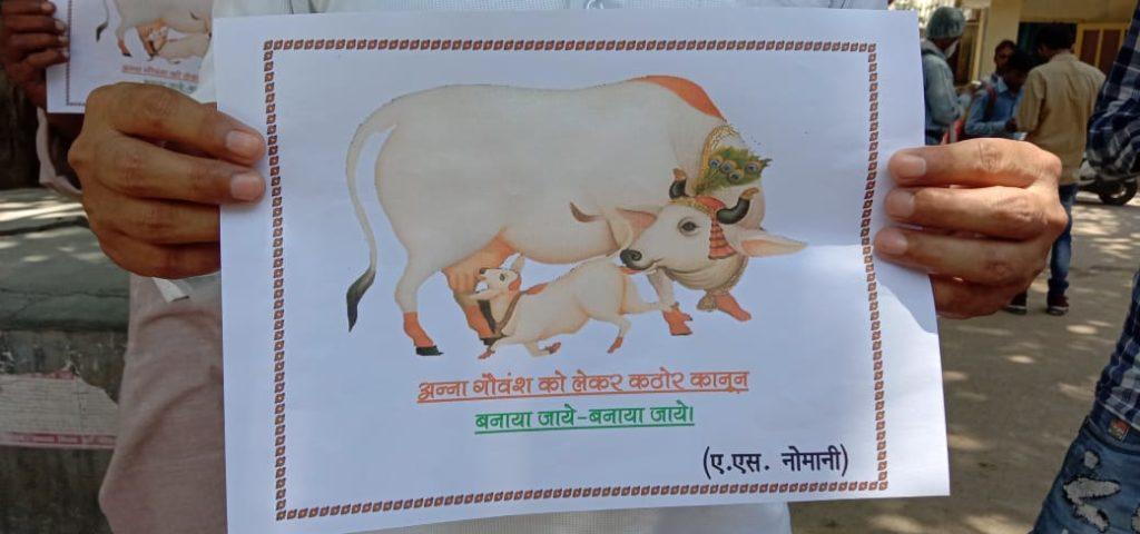 बाँदा- विषैला चारा खाने से 15 गायों की हुई मौत