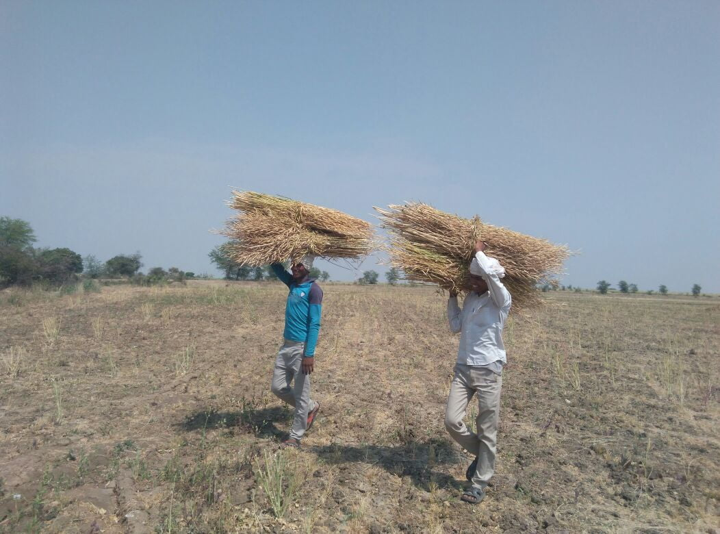 Growing problem of farmers