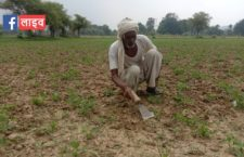It has not been raining for 15 days, how should farmers do farming?