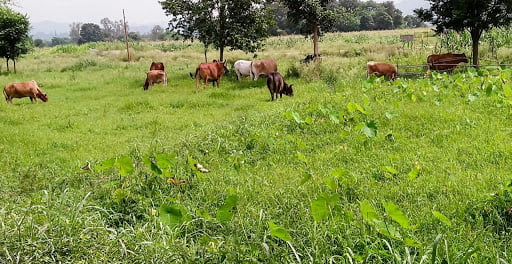 No hearing of villagers troubled by Anna animals