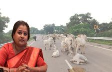 Will the government be able to stop the gathering of Anna animals?