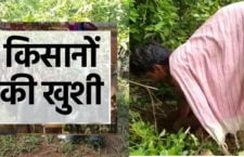 Farmers got saplings under MNREGA scheme
