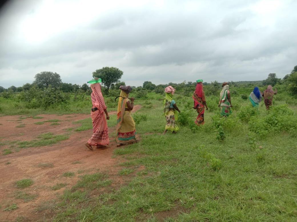 Harvesting in Chitrakoot