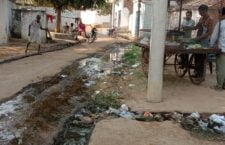 Mosquitoes flourishing in the drains