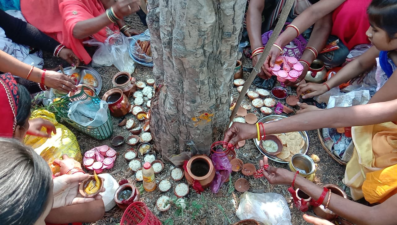 women in mahoba worshiping amla tree