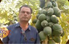 Awadhesh Pratap Bundela is famous for papaya cultivation