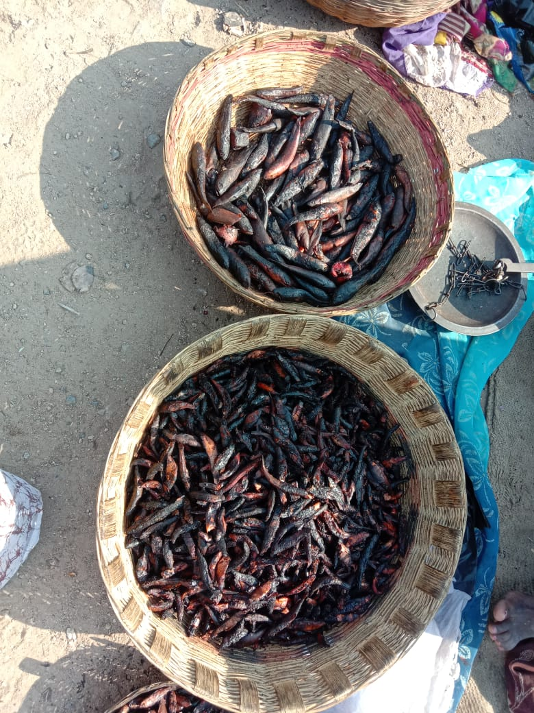 Famous geel fishes of Belatal