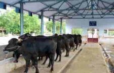 MNREGA-animal-shed-scheme-2020