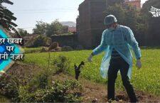 bird flu cases in panna district