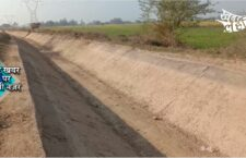 Dry crops due to no water release in the canal