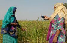 Gomti of Chitrakoot grows on barren land