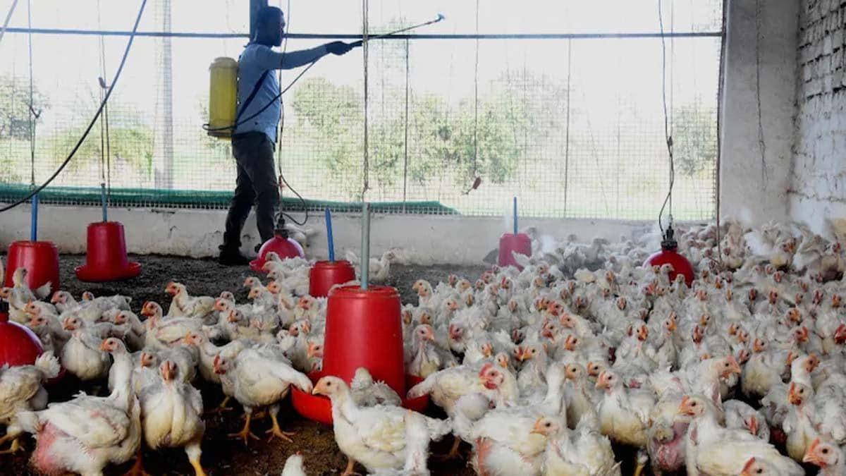 bird flu 2021