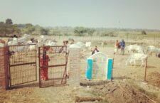 Anna animals are being starved to death in Basinha village Gaushala