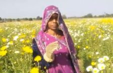 Cultivation of flowers for 20 years, see how much profit there is