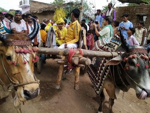 Kishan astride the bullock cart on his way to the wedding mandap in Banda, 2019.