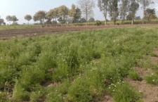Ayurvedic farming showed farmers a new dawn of success