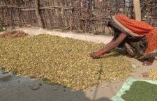 चित्रकूट: रोज़गार न होने के कारण दिन-रात जड़ीबूटियां बना कर गुज़ारा कर रहे लोग