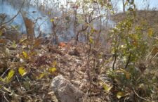 पन्ना: जंगल में लगी भीषण आग, काबू पाने में जुटा वन विभाग
