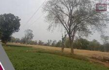 खेत में पानी लगाते समय किसान के ऊपर गिरा 11 हजार वोल्टेज तार