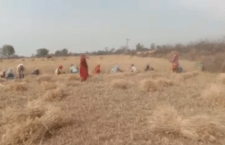 in-chitrakoot-laborers coming to work in fields from other states